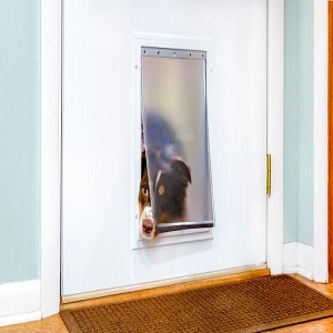 Why You Should Install A Doggie Door
